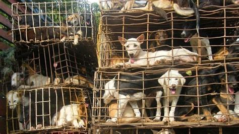 petition inhumane treatment  dogs  puppy mills