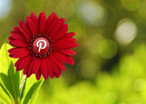 Pretty Pinterest | Please feel free to use this image ...
