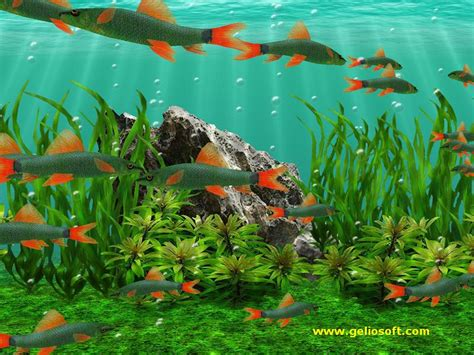 Animated Moving Fish Wallpapers - free live moving fish wallpaper wallpapersafari