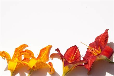 images leaf petal summer orange paper flora