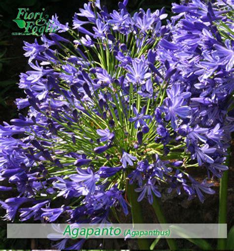 nome di fiore come si chiama diamo un nome a fiori e piante fiori e