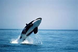 Blackfish Documentary Exposes Dark Side Of Seaworld And