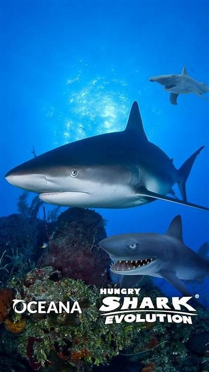 Shark Hungry Evolution Oceana Thank Wallpapers Sharks