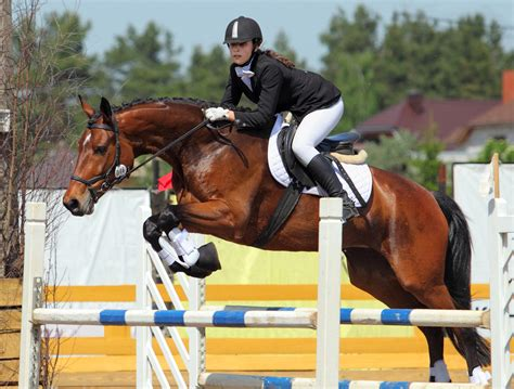 jumping horse riding training horseback learn jumps course inspired rider better many running