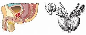 Лечение простатита кривой рог отзывы