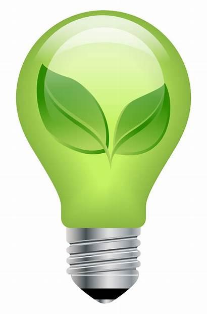 Bulbs Forgetmenot