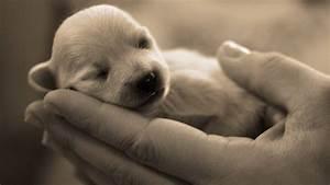 Newborn puppy - Dogs Wallpaper
