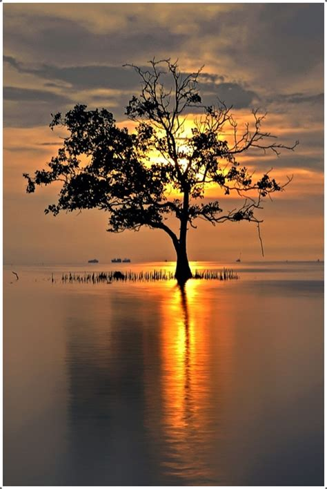 beautiful sunset  water images coolupon