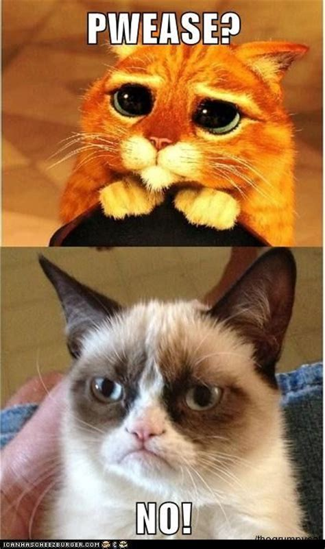 Puss In Boots Meme - 7094 best images about cats on pinterest grumpy cat humor cute cats and funny cat pictures