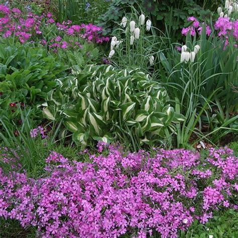 perennial bushes perennial flowers and plants in your garden flower garden