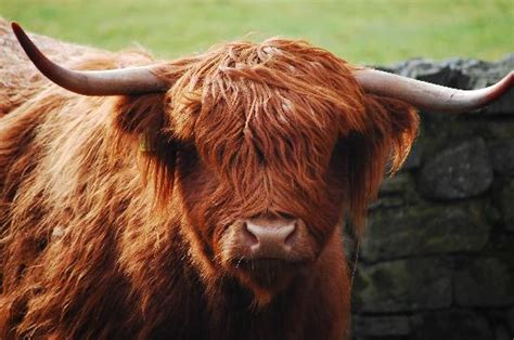 Picture Of Scottish Highlands, Scotland