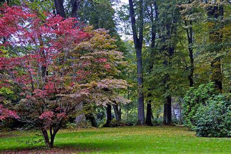 Englischer Garten Michelstadt by Engl Garten Eulbach Picture Of Englischer Garten