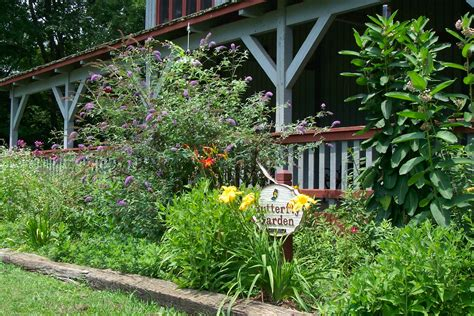 plants for garden butterfly garden plants asclepias keep them safe the north american butterfly regional