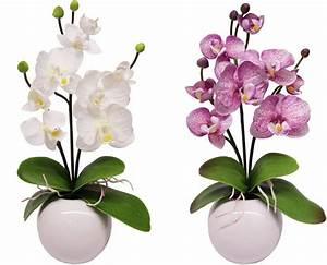 Kunstblumen Orchideen Topf : kunstblume home affaire orchidee 2 stck otto ~ Whattoseeinmadrid.com Haus und Dekorationen