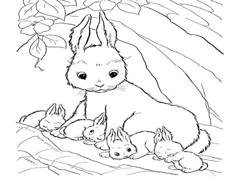 Cute Bunny Coloring Pages To Print