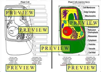 cells  plant cell coloring worksheet  questions