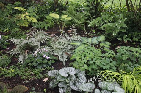 ferns in the garden gardening and gardens