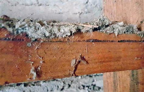 home insurance cover asbestos removal