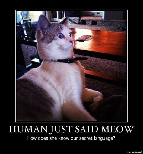 Cat Meow Meme - 7 best images about funny faces on pinterest