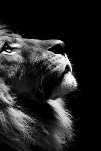 Lion King #photography #black and white #animal #closeup  i heart cats  Juxtapost