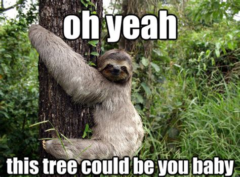 Sexy Sloth Meme - dirty sloth quotes quotesgram