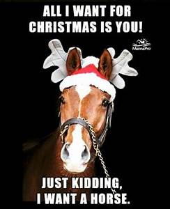Funny Horse Say... Funny Christmas Horse Quotes