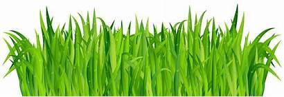 Grass Clip Fresh Clipart Cartoon Drawing Greengrass