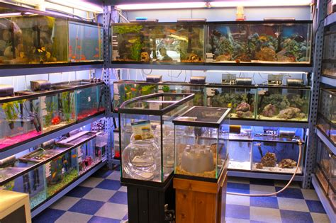 local pet shop in tahoe city pet station tahoe city