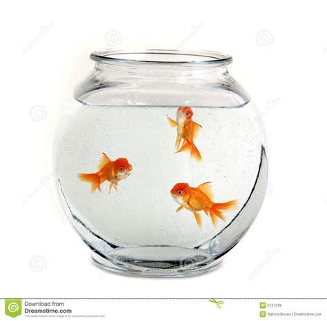 goldfish   bowl royalty  stock  image