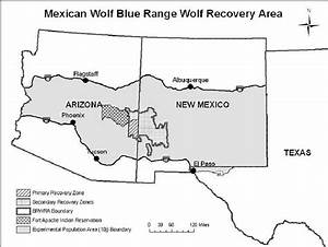 Map Of Mexican Gray Wolf Recovery Area  Including The Blue Range Wolf