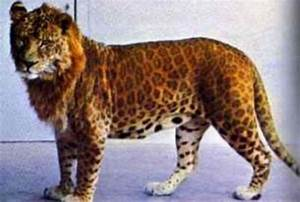9 Fascinating Real Hybrid Animals