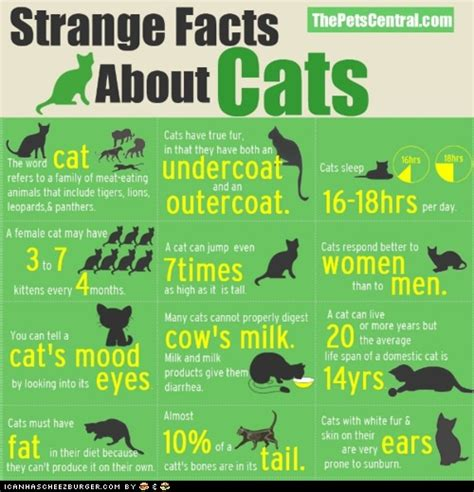 Cat Facts Meme - 50 best facts everyone should know images on pinterest fun facts crazy facts and interesting