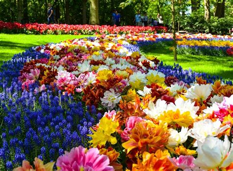 Keukenhof And Amazing Flowerfields