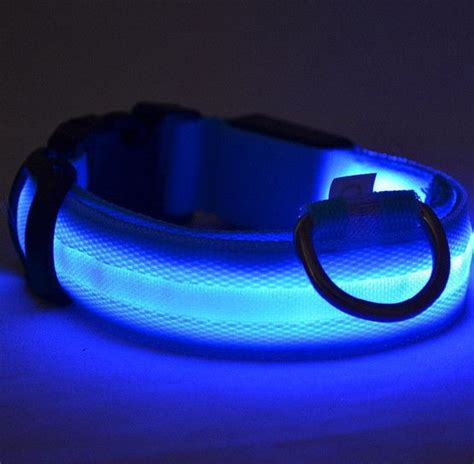 led glow dog collar offer paws  eternity