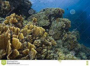 Red Sea Underwater Scene stock photo. Image of ocean, life ...