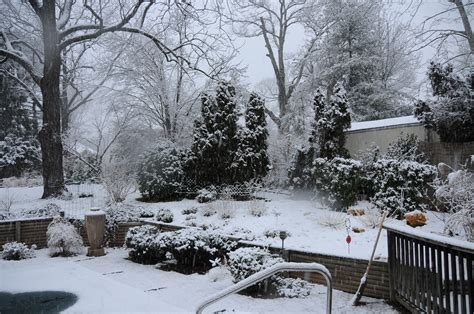 landscaping in winter lessons from the winter garden of my discontent black walnut dispatch