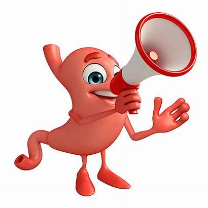 Cartoon Stomach Character Digestive Clipart System Loudspeaker