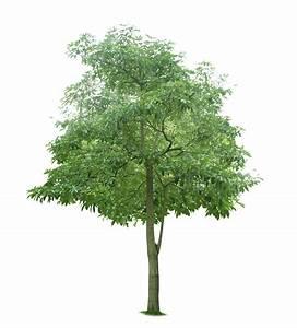 Tree 743 - Trees - Landscape scenery