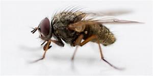 Fliegen Abwehren Draußen : petition der woche eine stadt k mpft mit den fliegen ~ Michelbontemps.com Haus und Dekorationen