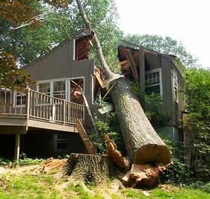 Quel Arbre Planter Près D Une Maison : comment programmer la direction de la chute d 39 un arbre ~ Dode.kayakingforconservation.com Idées de Décoration
