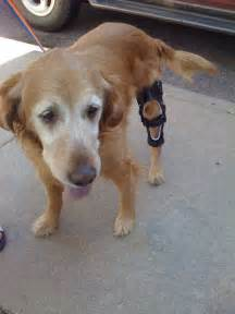 Dog Knee Brace for ACL Injury
