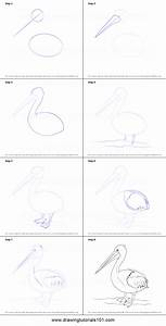 How To Draw A Pelican Printable Step By Step Drawing Sheet   Drawingtutorials101 Com