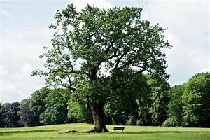 Dekorative Bäume Für Kleine Gärten : b ume f r g rten und menschen ~ Markanthonyermac.com Haus und Dekorationen