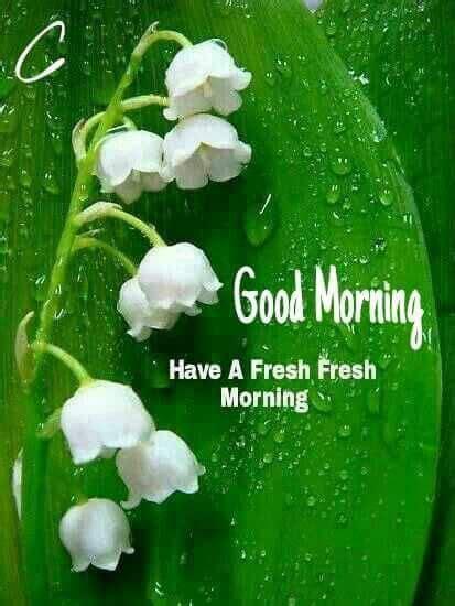 good morning images  gif hd pics