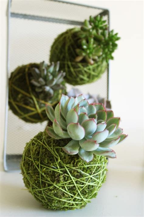string plants kokedama japanese string plants beautiful home and garden