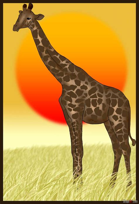 draw  giraffe step  step safari animals