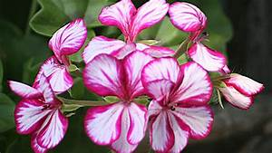 What, Are, Examples, Of, Ornamental, Plants