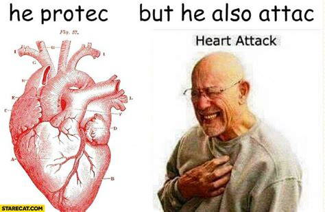 heart protects attacks heart attack starecatcom