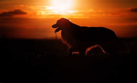 Animal Silhouette Wallpaper - wallpaper silhouette sunset animals 3877