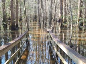 South Carolina Congaree National Park